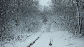 在雪的道路在森林里 免版税图库摄影
