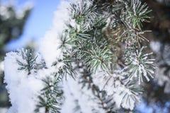 在雪的针 图库摄影