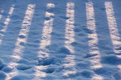 在雪的镶边篱芭阴影 免版税库存照片