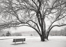 在雪的长凳 免版税库存图片