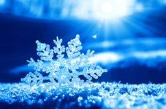 在雪的雪花 免版税图库摄影