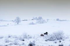 在雪的马 免版税库存图片