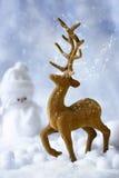 在雪的驯鹿 库存照片