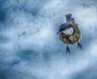 在雪的鸟 免版税库存图片