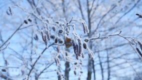 在雪的冻分支椴树在一个蓝天自然冬天风景 图库摄影