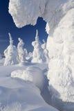 在雪的结构树 库存图片