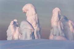 在雪的结构树 免版税图库摄影