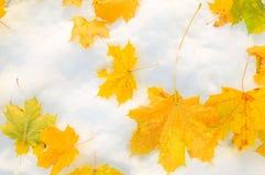 在雪的黄色叶子 库存图片