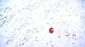 在雪的Daruma 库存图片