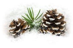 在雪的Pinecone 库存照片