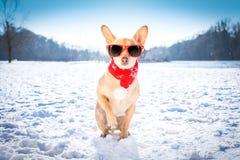 在雪的Reezing冰冷的狗 免版税库存图片