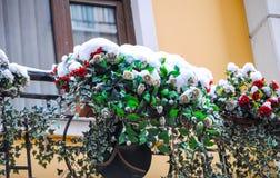 在雪的Rozen花 库存图片