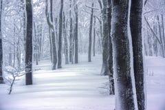 在雪盖的一个阴沉和有雾的森林 免版税库存照片
