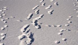 在雪盖的人的脚印在一个晴天 免版税库存照片