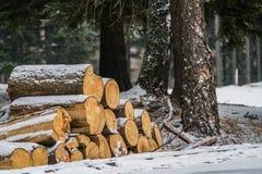 在雪盖的木日志 库存照片