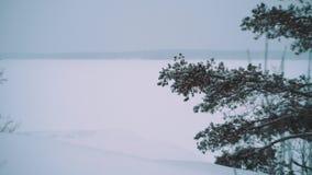 在雪盖的浩大的结冰的湖前面的杉树分支 股票视频