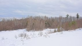 在雪盖的滚动的小山侧面用光秃和针叶树和灌木 免版税图库摄影