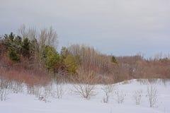 在雪盖的滚动的小山侧面用光秃和针叶树和灌木 库存照片
