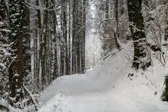在雪盖的瑞士森林在冬天期间 免版税库存图片