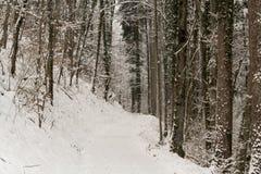 在雪盖的瑞士森林 免版税库存图片