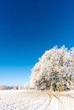 在雪盖的草甸旁边的几棵结霜的树 免版税库存照片