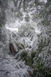在雪盖的蕨,维多利亚,澳大利亚 免版税图库摄影