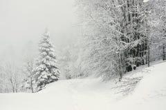 在雪盖的足迹在一个多雪的森林里 库存图片