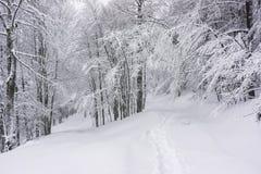 在雪盖的足迹 免版税库存照片