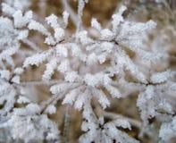 在雪盖的冻植物和冰在心脏塑造 免版税库存照片