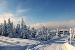 在雪礼服的山树 免版税库存图片