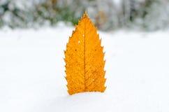 在雪种植的一片棕色叶子 免版税库存照片