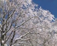 在雪结构树 免版税图库摄影