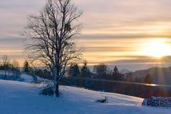 在雪自然的冬天风景与日落和树 免版税库存照片