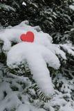 在雪被装载的胶冷杉树枝的唯一明亮的红色华伦泰心脏 免版税图库摄影