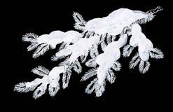 在雪问候的具球果杉木分支 免版税库存图片
