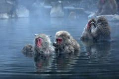 在雪附近的jigokudani猴子 库存照片