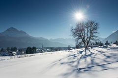 在雪风景的唯一树 库存照片