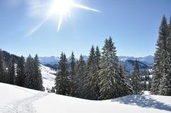在雪风景的树 库存图片