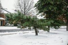 在雪风暴冬天雪树以后的一个好的房子 免版税库存照片