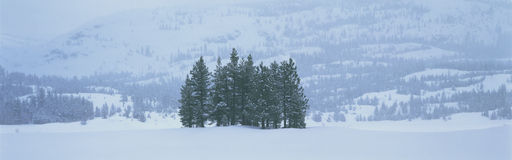 在雪风暴的冬天结构树 免版税库存图片