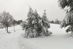在雪风暴以后在公园在一阴暗天 免版税库存图片