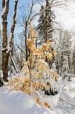 在雪风暴以后的冬天场面 图库摄影