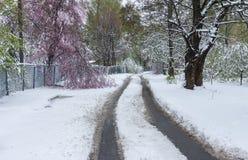 在雪风暴以后的春天风景 库存图片