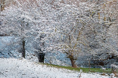在雪风暴以后的结构树 库存照片