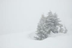 在雪风暴的云杉 库存图片