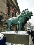 在雪风暴的狮子 库存照片