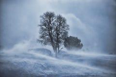 在雪飞雪的树 免版税库存图片