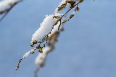 在雪,圣诞节的一朵干花 库存照片