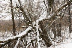 在雪,特写镜头下的树 免版税库存图片