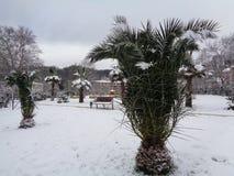 在雪,索契,俄罗斯的棕榈树 免版税库存照片